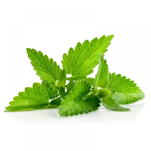 Spearmint - Fragrance Note (10ml)