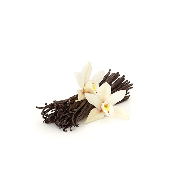 French Vanilla - Fragrance Oil