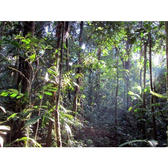 Rainforest - Fragrance Oil